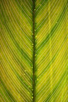 Gros plan des veines et des structures des feuilles vertes.