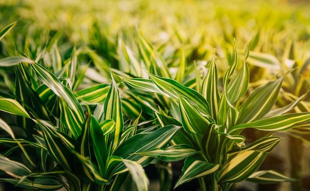 Gros plan, vert, feuilles, soleil