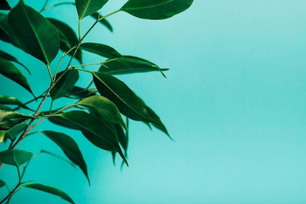 Gros plan, de, vert, feuilles, sur, turquoise, fond