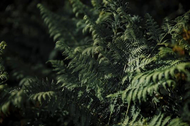 Gros plan, vert, fougère, feuilles