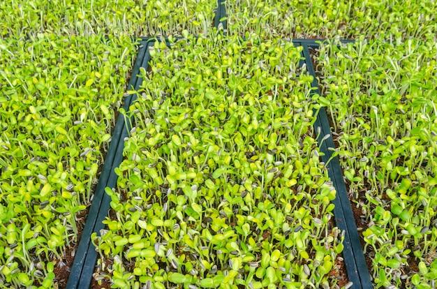 Gros plan, vert, plant, croissant, sol