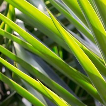 Gros plan, de, vert, plante, feuilles, zona, centre, san, miguel, allende, guanajuato, mexique
