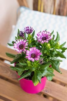 Gros plan vertical à angle élevé de fleurs roses en fleurs dans un pot de fleur rose