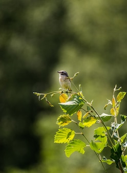 Gros plan vertical d'un beau petit oiseau sur une branche d'arbre sous la lumière du soleil