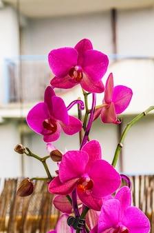 Gros plan vertical de belles orchidées roses
