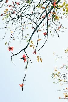 Gros plan vertical d'une branche d'arbre en fleurs contre le ciel bleu