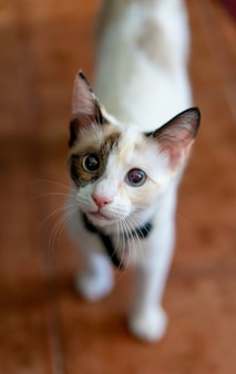 Gros plan vertical d'un chat mignon sous la lumière du jour