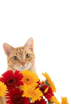 Gros plan vertical d'un chat roux avec des fleurs rouges et jaunes isolés sur un mur blanc