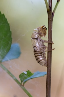 Gros plan vertical d'une coquille de nymphe libellule vide