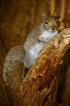 Gros plan vertical d'un écureuil mignon sur un arbre
