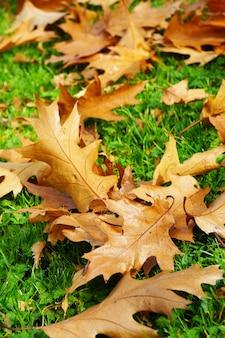 Gros plan vertical de feuilles d'automne sèches tombées sur l'herbe verte