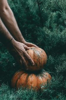 Gros plan vertical d'une main saisissant une citrouille d'un pin