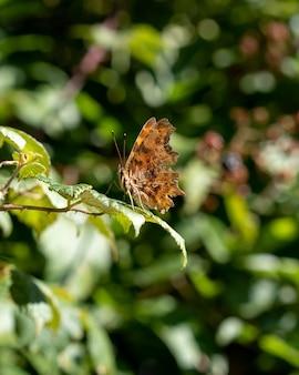 Gros plan vertical d'un papillon sur une feuille verte