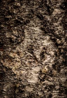 Gros plan vertical d'une texture d'arbre