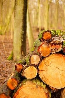 Gros plan vertical tourné de bois de chauffage haché - concept d'abus de la nature