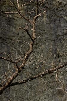 Gros plan vertical tourné des branches sèches d'un arbre devant un rocher