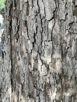 Gros plan vertical tourné d'écorce d'arbre brun