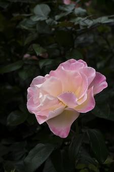 Gros plan vertical tourné d'une fleur rose avec un naturel flou