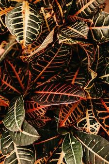 Gros plan vertical tourné d'une plante à feuilles rouges et vertes