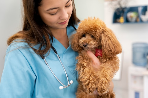 Gros plan vétérinaire tenant un chien mignon