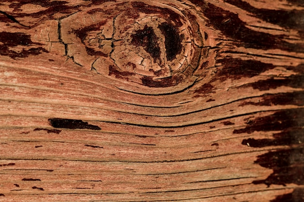 Gros plan, vieil arbre, à, conception, texture