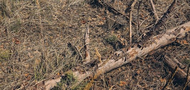 Gros plan de la vieille branche d'arbre nue cassée allongée sur le sol dans les bois