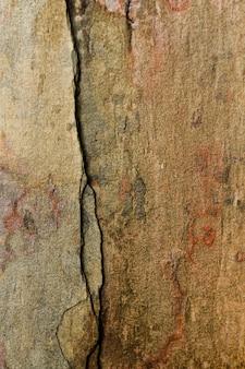 Gros plan de vieilles planches de bois fissuré