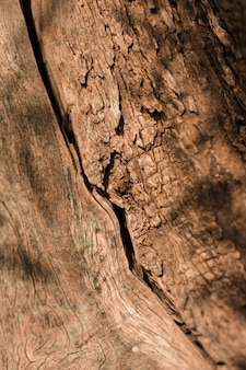Gros plan, vieux, bois, texturé