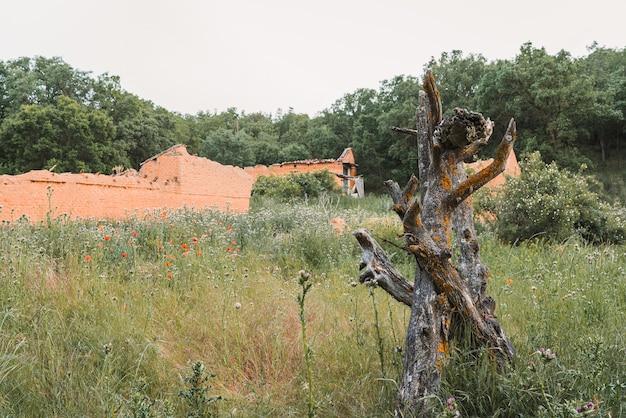 Un gros plan de vieux tronc d'arbre à l'arrière-plan un bâtiment abandonné d'adobe
