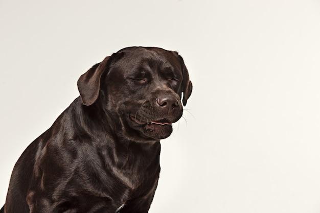 Gros plan visage de chien qui pleure
