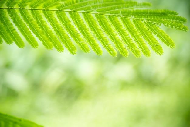 Gros plan, vue nature, feuille verte, sur, verdure floue, sous, lumière soleil, à, bokeh, et, copyspace