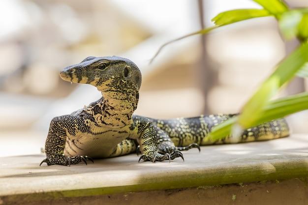 Gros reptile se bouchent