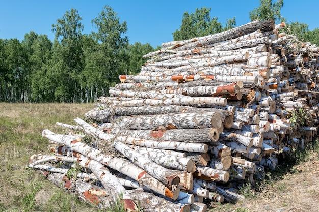 Un gros tas d'arbres abattus se trouve à la lisière de la forêt