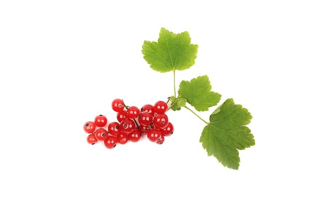 Groseille rouge avec une feuille isolée sur fond blanc