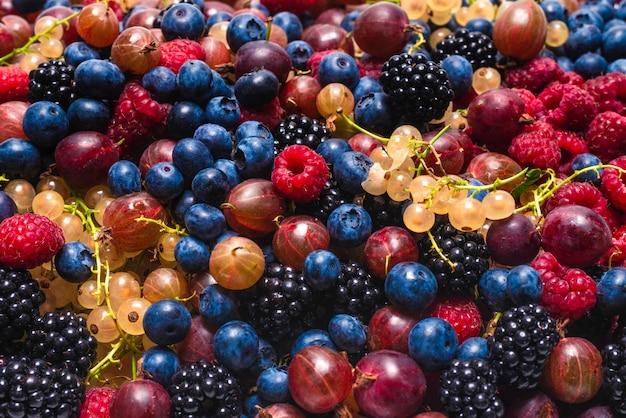 Groseilles à maquereau, myrtilles, mûres, framboises, fond de groseilles blanches et rouges.