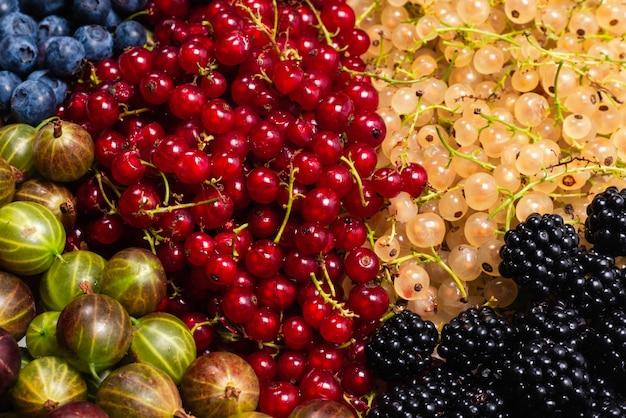 Groseilles à maquereau, myrtilles, mûres, framboises, groseilles blanches et rouges.