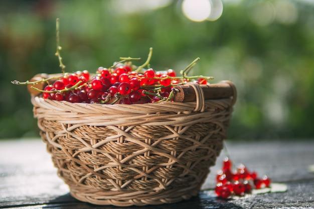 Groseilles mûres rouges dans un panier en bois