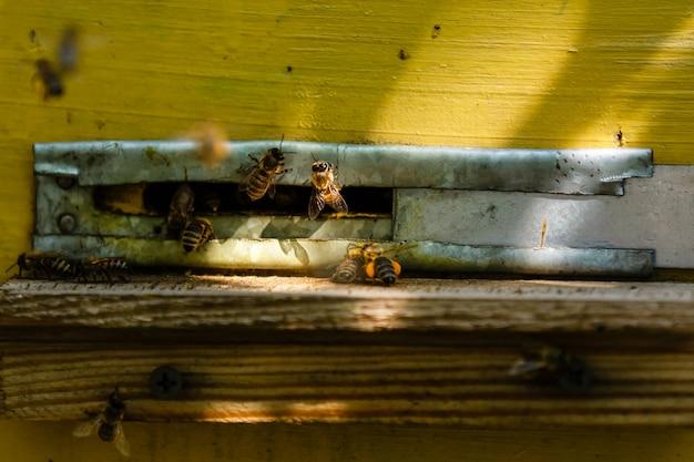 Groupe d'abeilles près d'une ruche