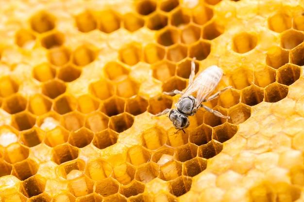 Groupe d'abeilles sur shoot studio en nid d'abeille.