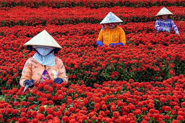 Groupe d'agriculteurs vietnamiens travaillant avec le jardin de fleurs rouges à sadec