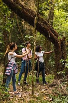 Groupe d'amis marchant dans le parc et profitant du moment en plein air