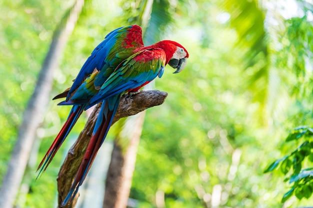 Groupe d'aras colorés sur des branches d'arbres