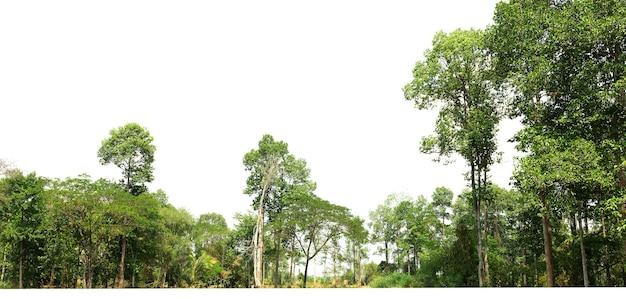 Groupe arbre vert isoler sur blanc