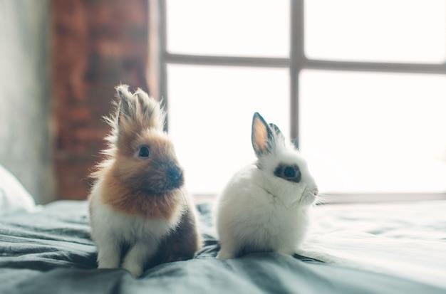 Groupe de beauté mignon doux petit lapin de pâques bébé lapins dans des couleurs variées brun noir et blanc dans la chambre sur le lit.