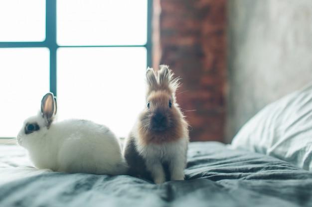 Groupe de beauté mignon mignon petit lapin de pâques lapin bébé dans différentes couleurs noir brun et blanc dans la chambre sur le lit