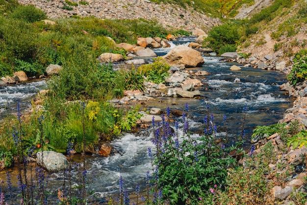 Groupe de belles fleurs pourpres de larkspur près du ruisseau mountain creek.