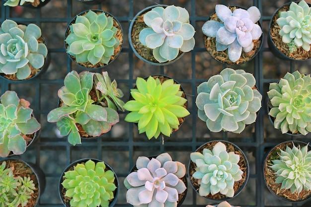 Groupe de cactus différents en serre. vue de dessus.