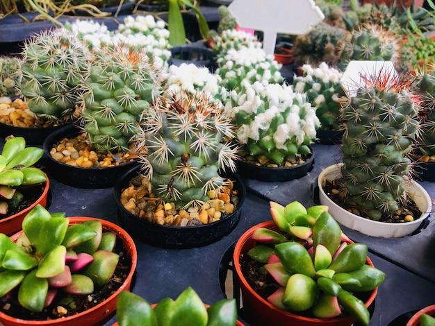 Groupe de cactus en pot de fleur