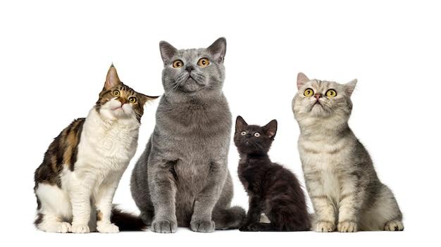 Groupe de chats devant un mur blanc