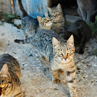 Groupe de chats sauvages dénudés noirs et gris